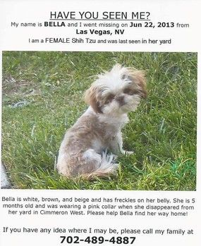 Puppy Stolen From Woman In Las Vegas Sad Animals Find Pets