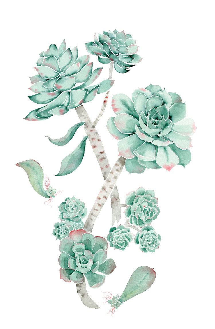 Succulent | 沙生 | Pinterest