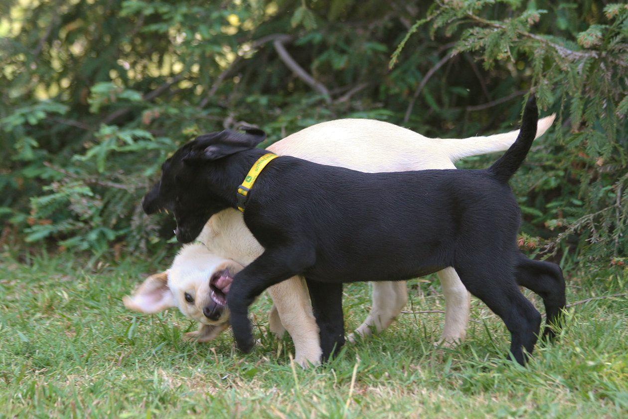 GROWL SNARL SNAP DOG BEHAVIOR Single Post Dog growling