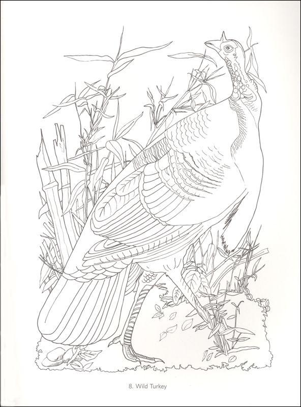 James Audubon Birds Coloring Book