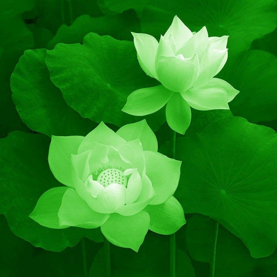 Next Ink Must Be A Green Lotus Skin Art Flowers Lotus Flower
