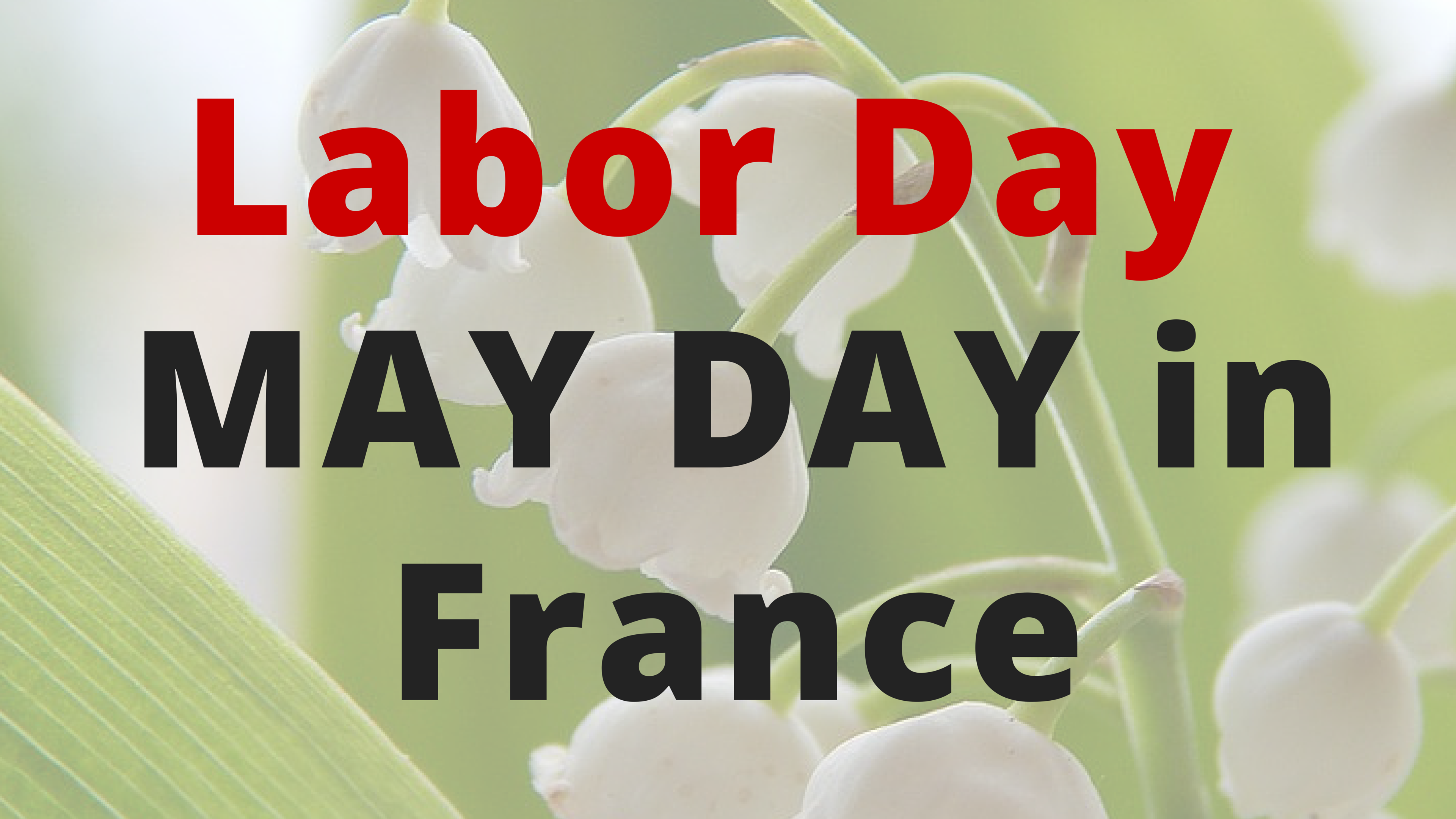 "Culture Du Muguet En France may day in france is called both ""labor day"" and ""may lily"