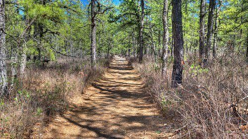 Petition · Protect the Pinelands, Amend NJ Title 39 · Change.org