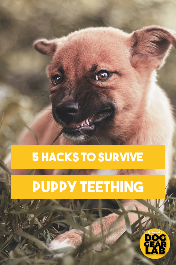 Are You Prepared For The Puppy Teething Stage If You Re A Long