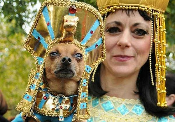 Los 10 mejores disfraces de perros, una selección
