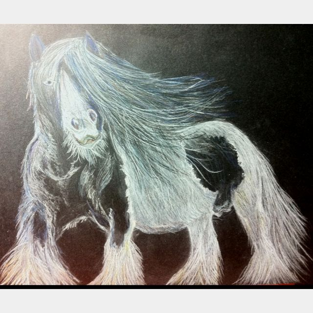 Gypsy Vanner, done on 18/06/2012