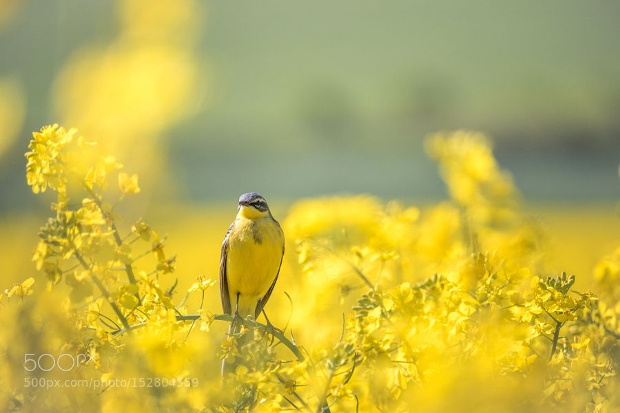Yellow in Yellow by paulbisping via http://ift.tt/1WTj1Sk