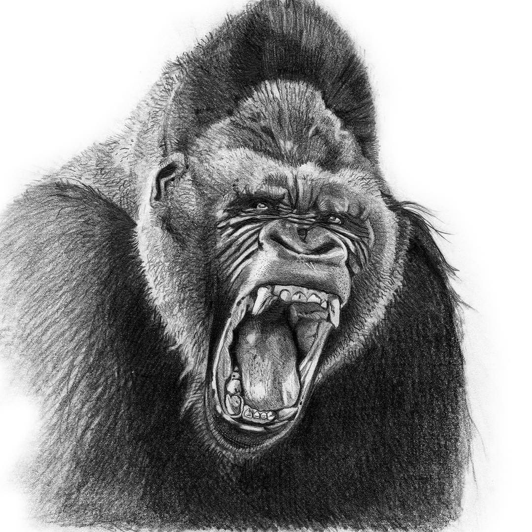 Couldnt figure out quite where to go with this guy but heres an angry gorilla william - King kong design ...