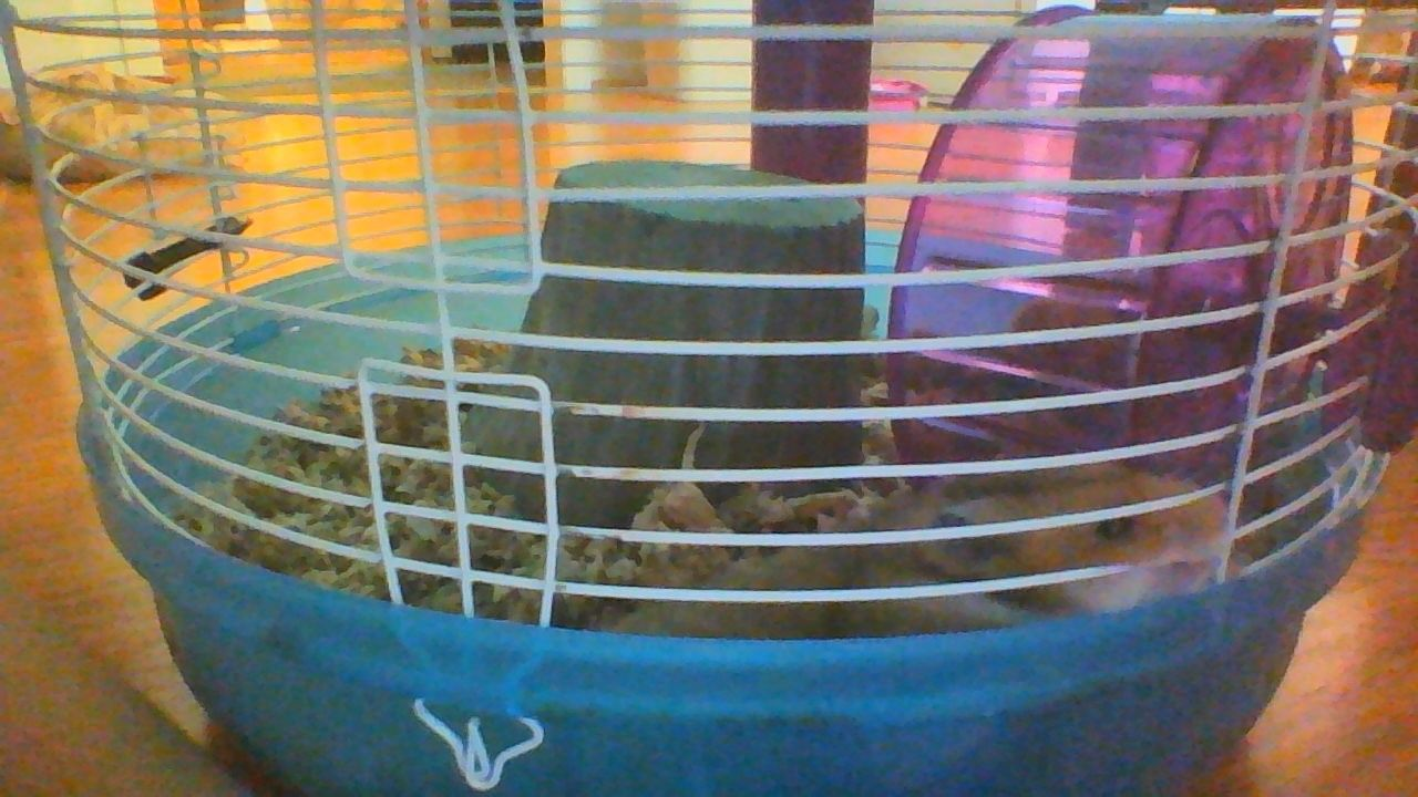 my  hamster <3 <3 his name is pat!