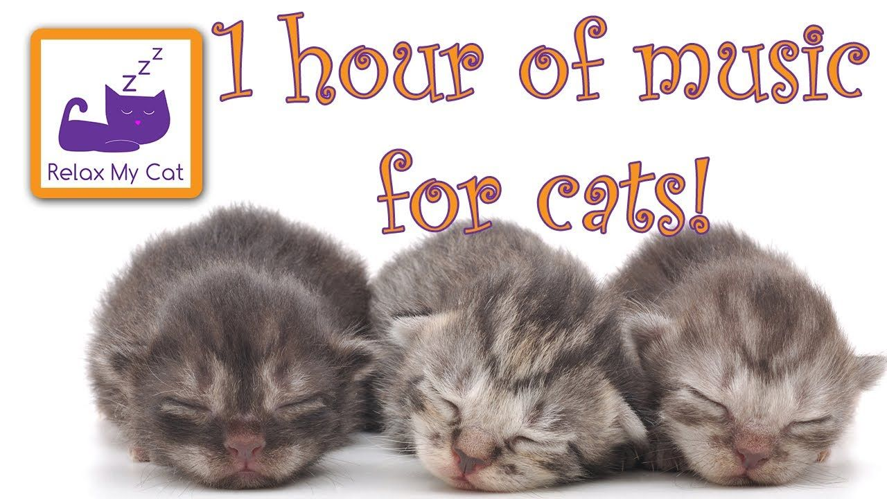 1 Hour Of Music For Cats Relax Your Cats And Send Them To Sleep Cats L Relaxing Music Sleep Cat Love Calming Cat