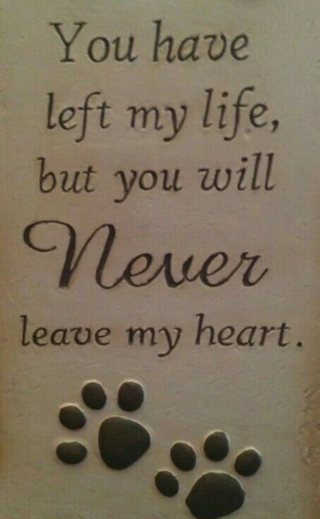Loss Of A Pet Just Saying Dogs