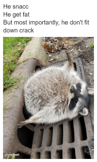 An Absolute Unit | Funny animal memes, Funny animals ...