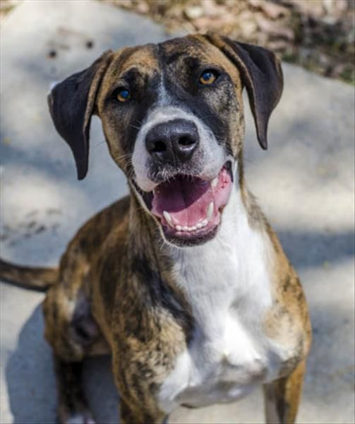 Meet Ringo at the Townsville RSPCA Animal Care Centre