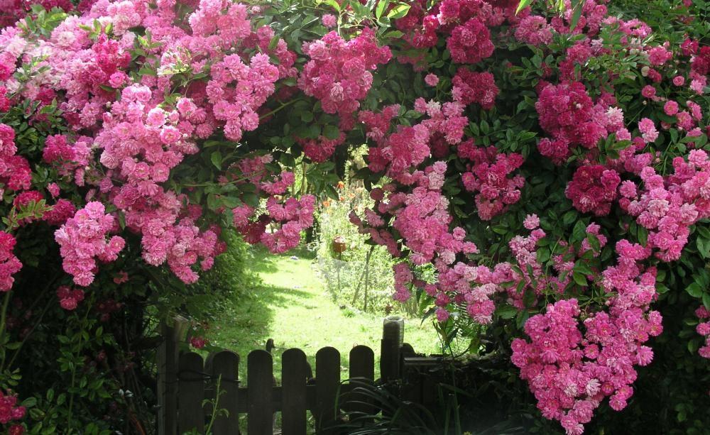 rosenbogen richtig aufstellen rosen pinterest rosen garten und rosenbogen. Black Bedroom Furniture Sets. Home Design Ideas
