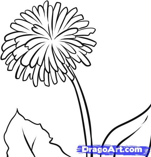 Step 6 How To Draw A Dandelion Flower Drawing Cute Coloring Pages Drawings