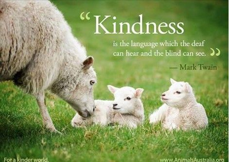 Pin By Julie Jordan On Animal Compassion Quotes Pinterest Sheep