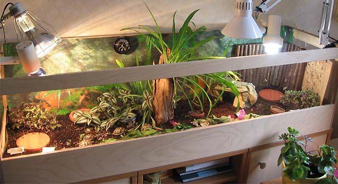 nice enclosures for my little guys aquarium pinterest landschildkr ten schildkr te. Black Bedroom Furniture Sets. Home Design Ideas