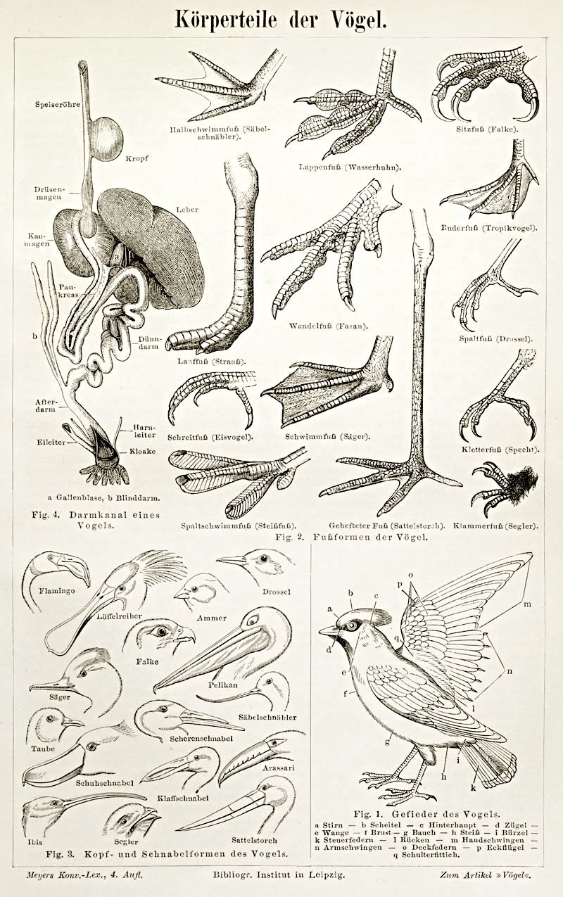 Studies Of Bird Feet Beaks And Wings These Will Be Helpful When