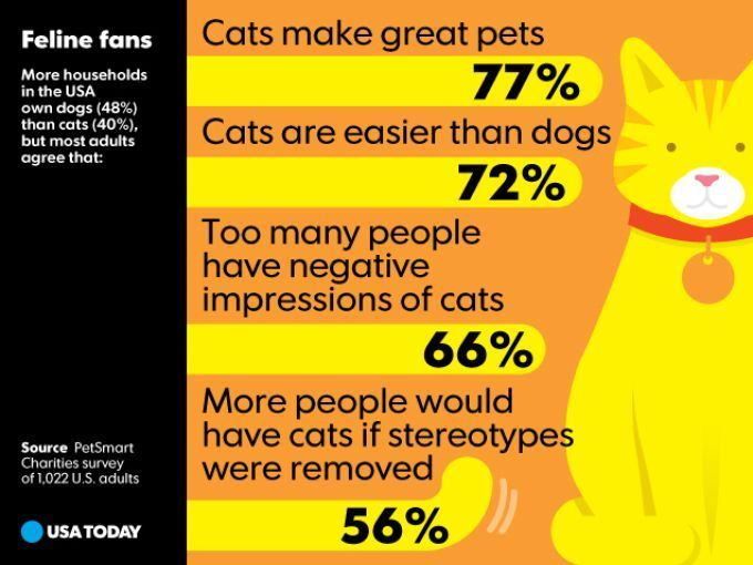 Feline Fans More Households In The Usa Own Dogs 48 Usa Today Snapshots Feline