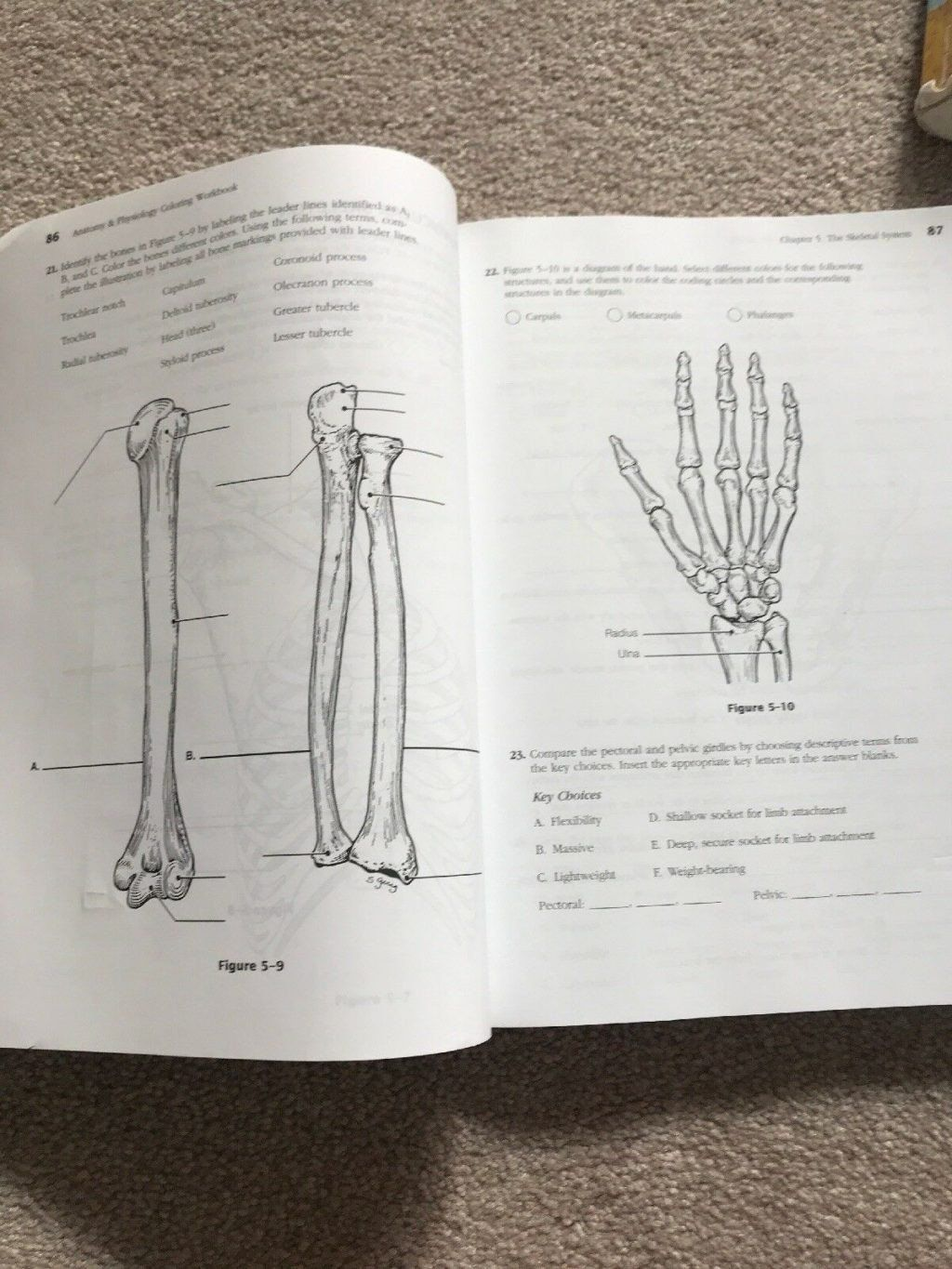 Anatomy And Physiology Coloring Workbook Answer Key Awesome Coloring Book World Fantastic Ana Anatomy Coloring Book Coloring Pages Inspirational Coloring Pages
