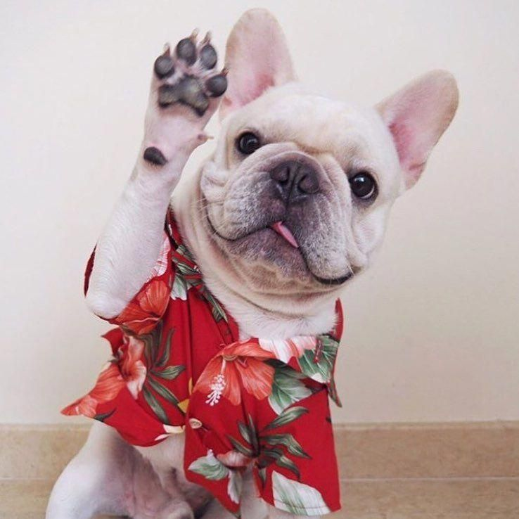 Obtain Wonderful Recommendations On Bulldogs They Are Accessible