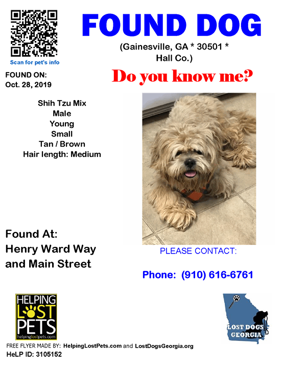 Do You Know This Dog Gainesville Henry Ward Way Main Street