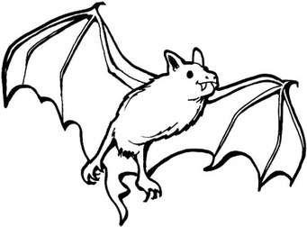 Bats Coloring Pages Norton Safe Search Fledermaus Malvorlagen Malvorlage Dinosaurier Tiervorlagen