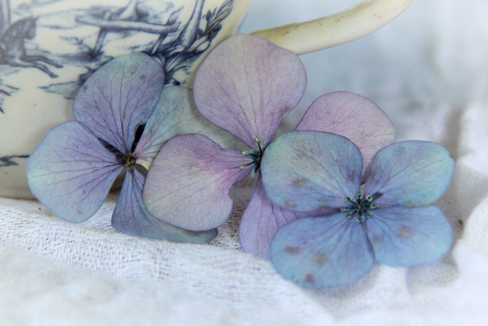 A Dead Hydrangea Is As Intricate And Lovely As One In Bloom Toni