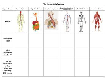 Related image | Sumathi | Human body systems, Body systems ...