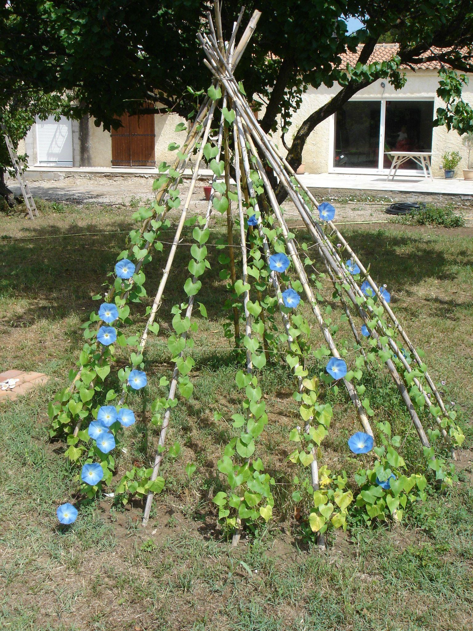 planter Recherche Google Planter