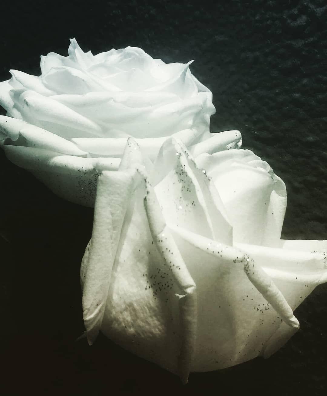 Chez Dior Roses Beautifulroses Roses Whiteroses Gardenroses