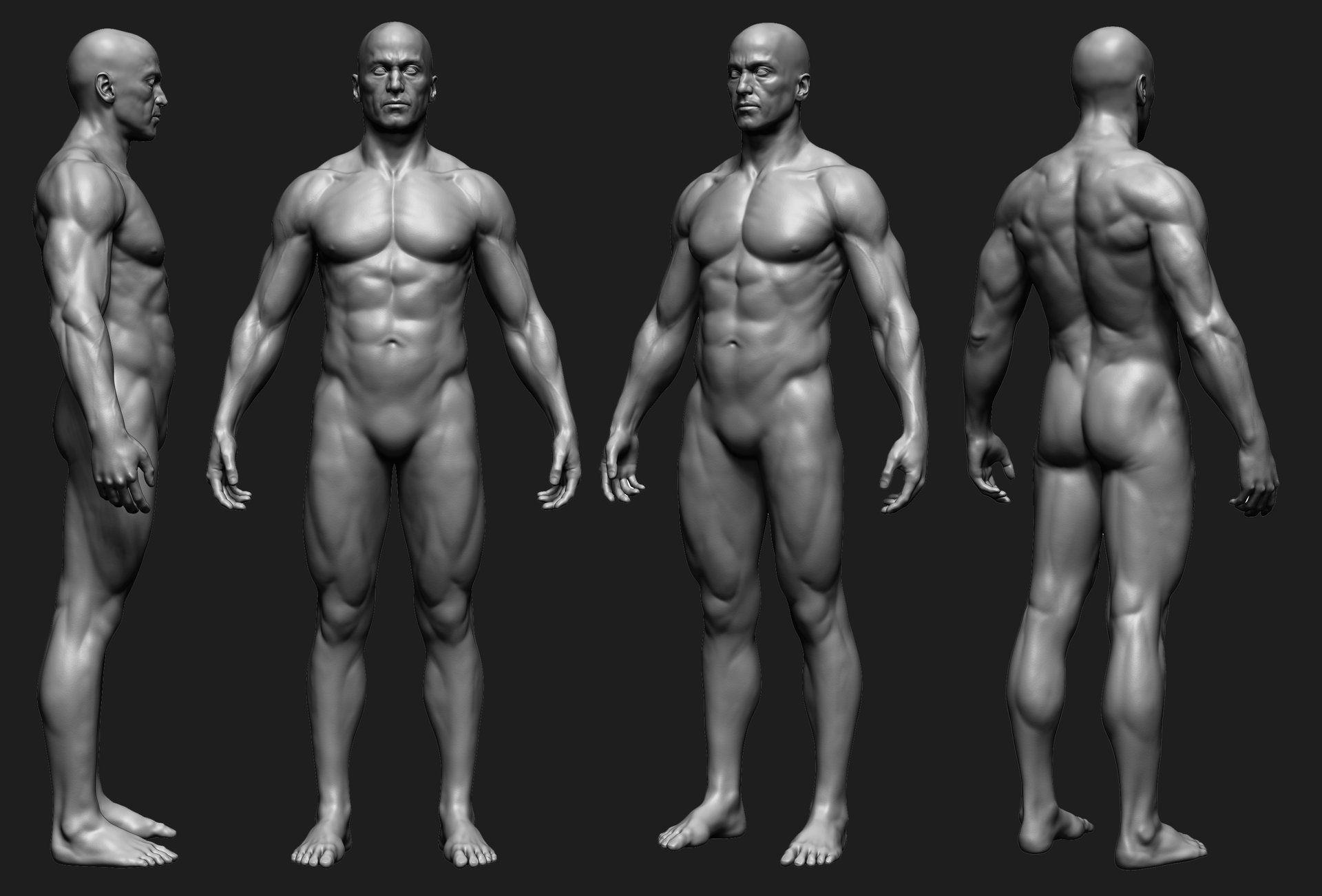 ArtStation - Anatomy study, Frank Tzeng | 3d characters | Pinterest ...