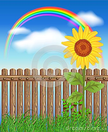 Wooden fence on green grass with sunflower
