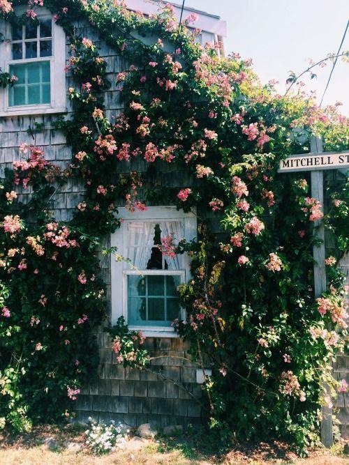 Ces Fleurs Poussent Superbement Entre Cette Divin Edifice Paysan B Tableaux Modernes En 2020 Chalet Mignon Style Cottage Jolie Maison