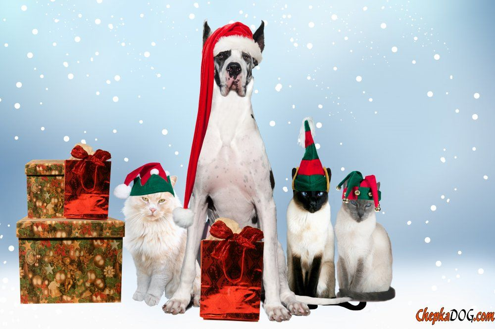 Daily Puppy Insta Puppy Puppy Wallpaper Christmas Puppy Christmas Dog