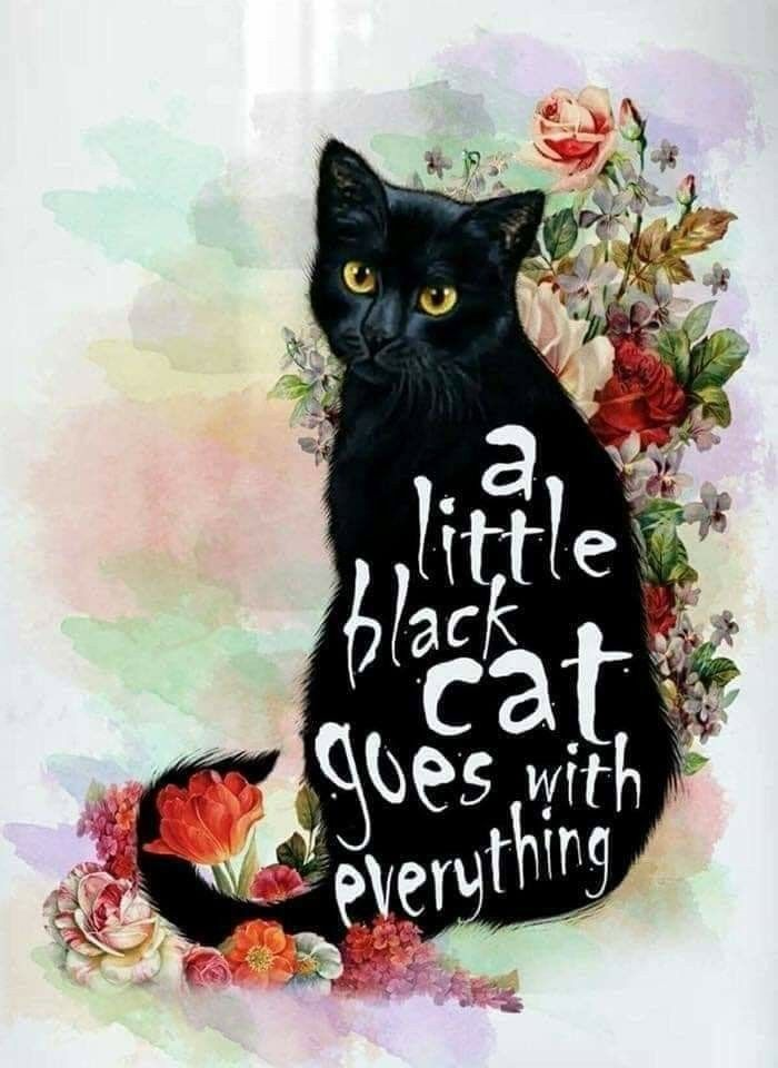 A Little Black Cat Goes With Everything Blackcat Cat Quotes Catwisdom A Oc Klein Frankensteinway Cat Drawing Cat Love Cat Quotes