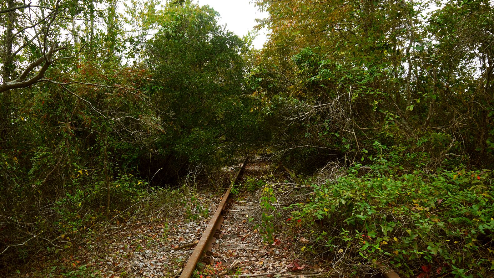overgrown railroad. 10/25/2015 | Pictures by Bigfoot. | Pinterest