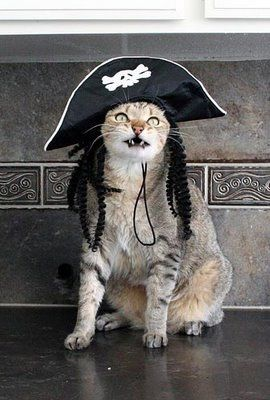 Thomas The Terrible Pirate Cat Pretty Cats Cats