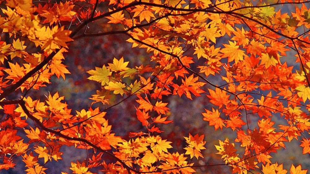 Top 5 Plumbing Tips For Fall I C Mechanical Services Free Fall Wallpaper Autumn Leaves Wallpaper Fall Wallpaper
