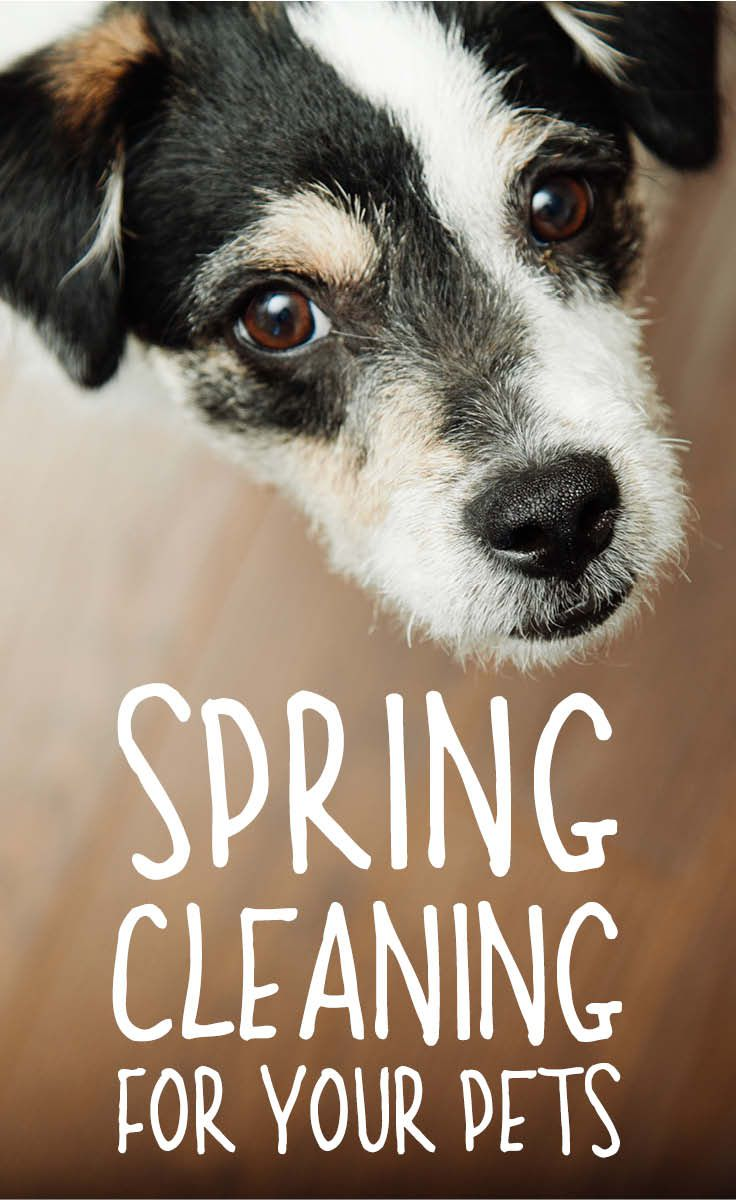 Spring Clean Pet Odors Out Of Your Home Home Jobs Work From Home Jobs Pet Odors