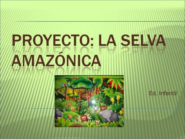 Proyecto La Selva Amazónica Selva Amazonica Selva Preescolar Ecosistema Selva