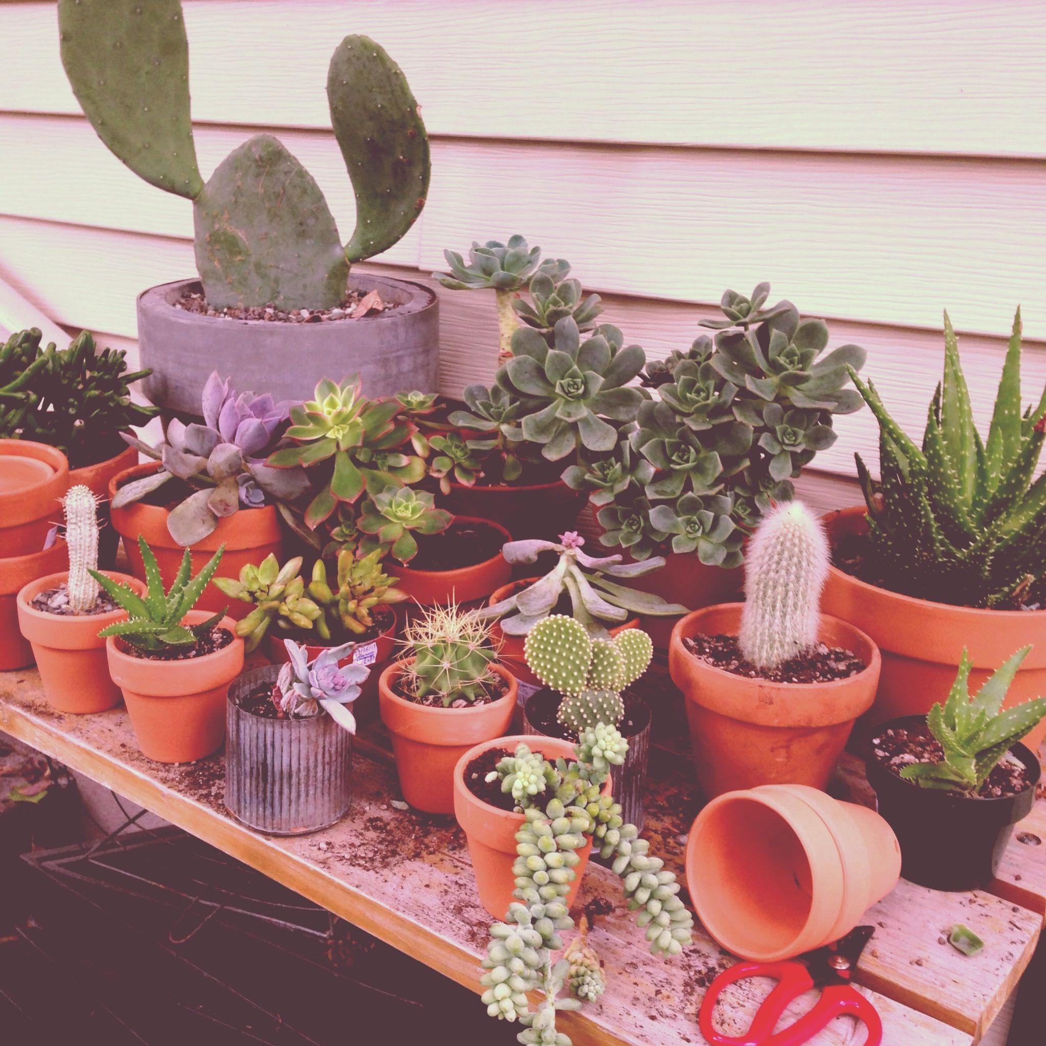 transplanting cactus and succulents blue stem designs pinterest. Black Bedroom Furniture Sets. Home Design Ideas