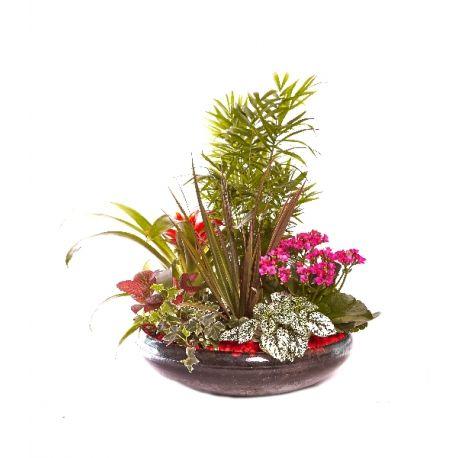 COMPOSICION PLANTA PLATO CRISTAL Plantas, Terrazas, Azoteas y
