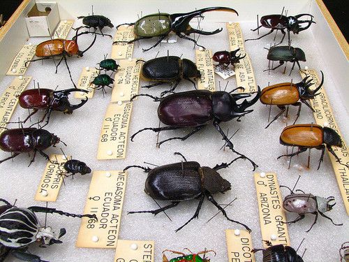 My next tattoo will be a beetle.
