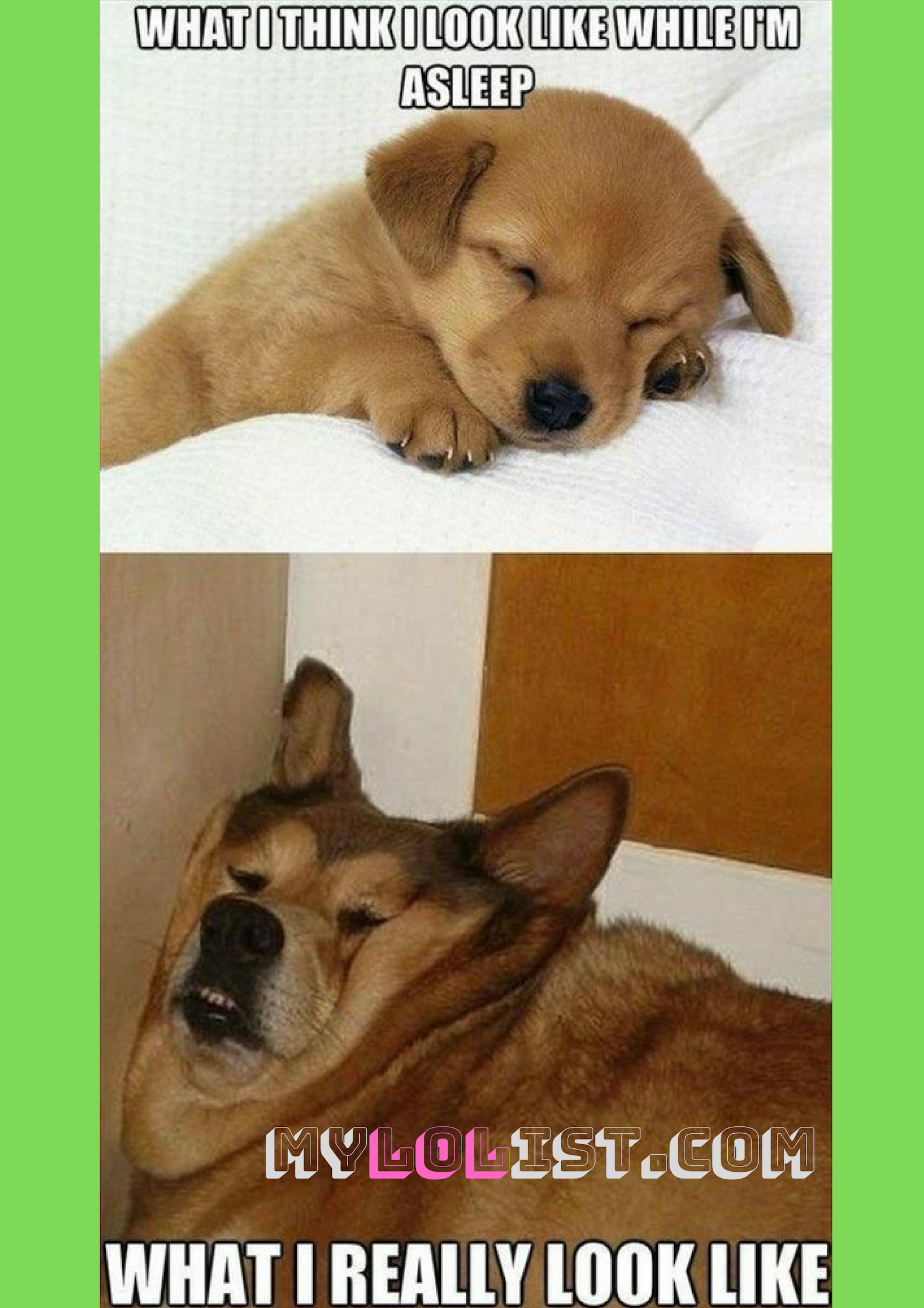 Funny Quotes Funny Photos There Is A Huge Difference Of How People Think They Look Lkike While They Ar Funny Animal Jokes Funny Animal Memes Funny Dog Memes