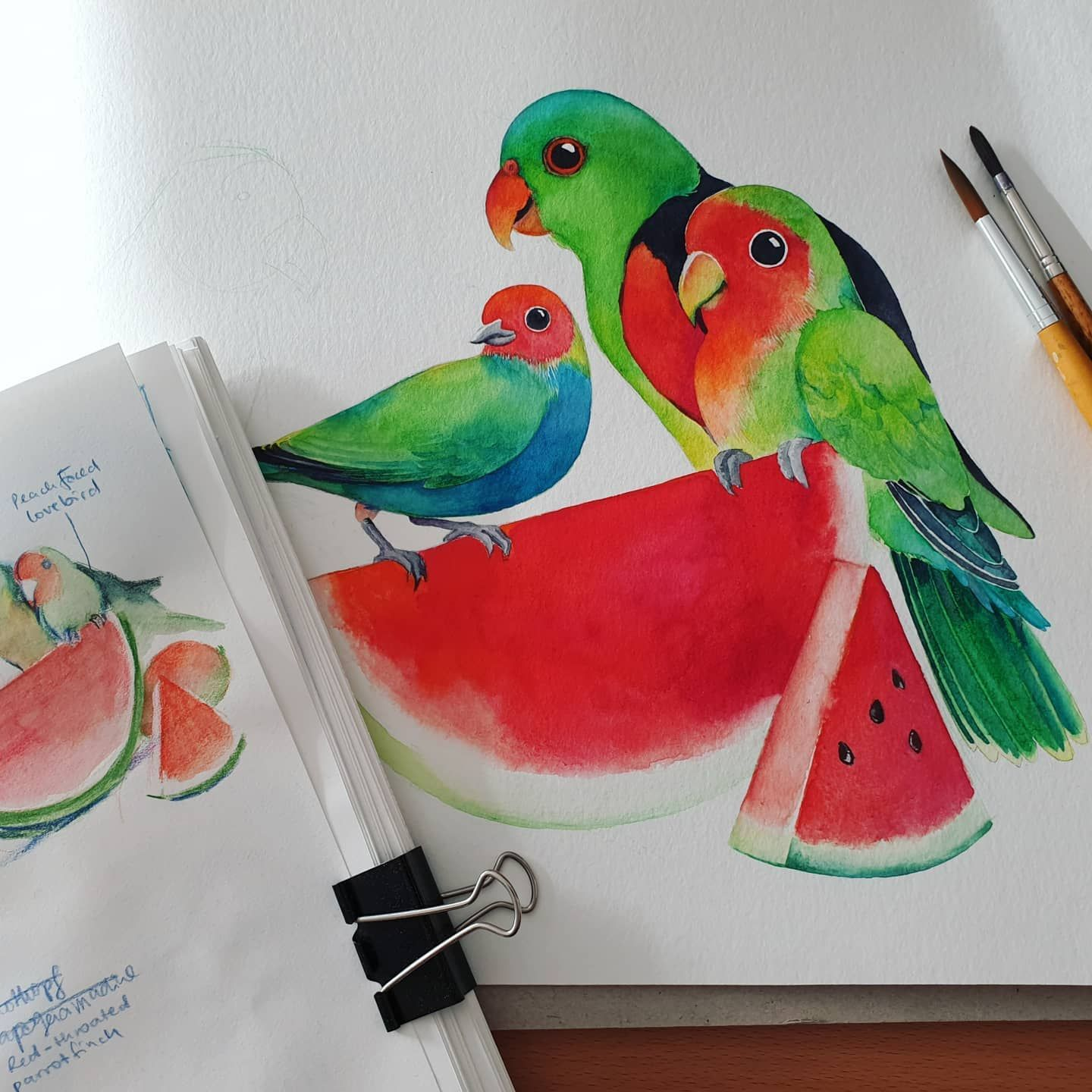 Sketch vs. Half finished illustration :) These are a red winged parrot peach faced lovebird and bay-headed tanager. . . . #bird #birdsofinstagram #animals #animalillustration #animalillustrations #redandgreen #greenred #summervibes #watercolor #watercolorillustrations #watercolourpaintings #watercolorillustration #illustrations #illustratorsoninstagram #illustration #illustrationmadeingermany #illustrator #watercolourillustration #watercolors #hahnemühle #boesner #davincibrush #redwingedparrot #