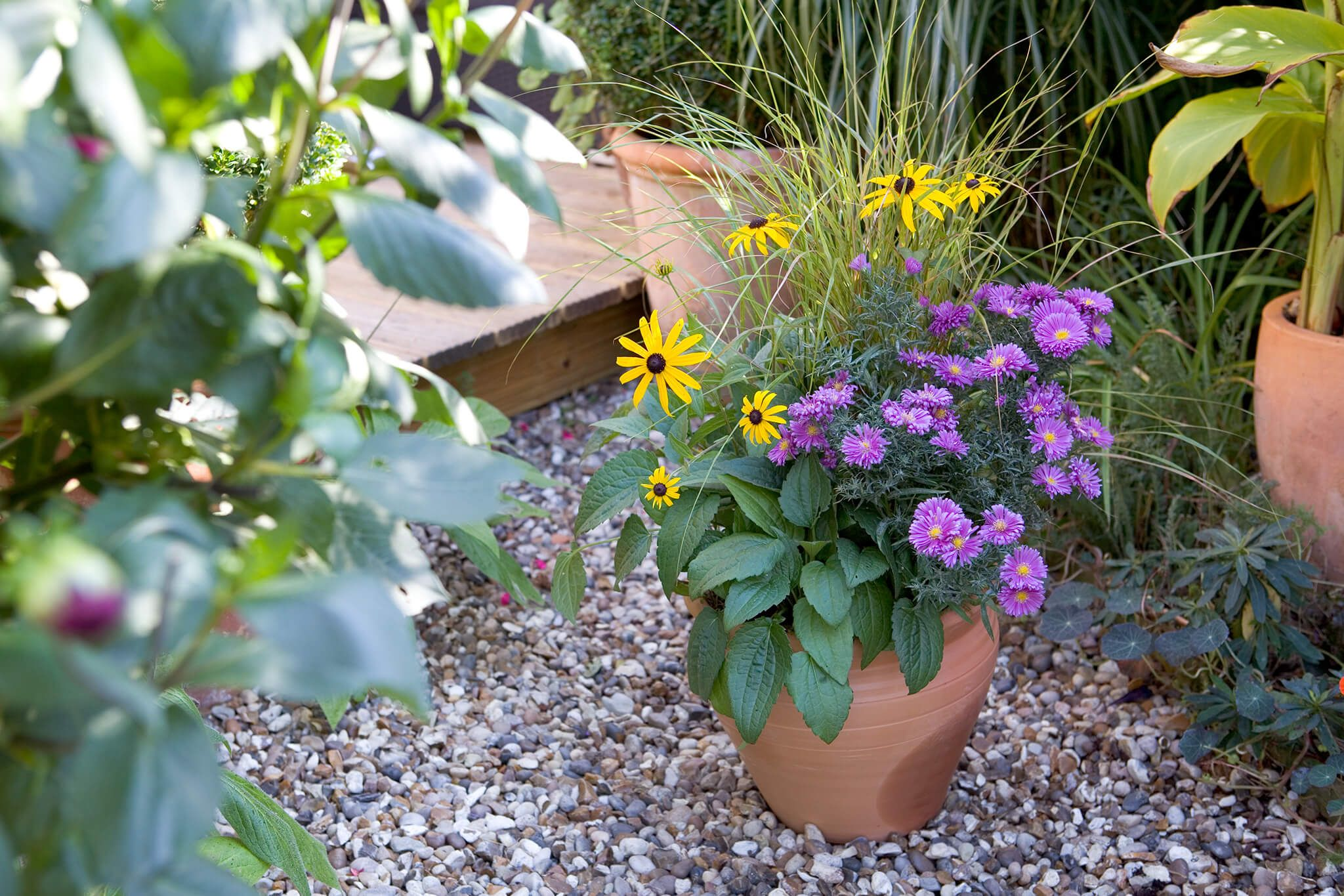 Check Out These Colourful Autumn Container Ideas Planted Up With A