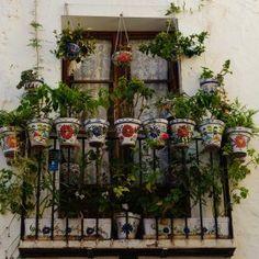 flores en las ventanas - Buscar con Google