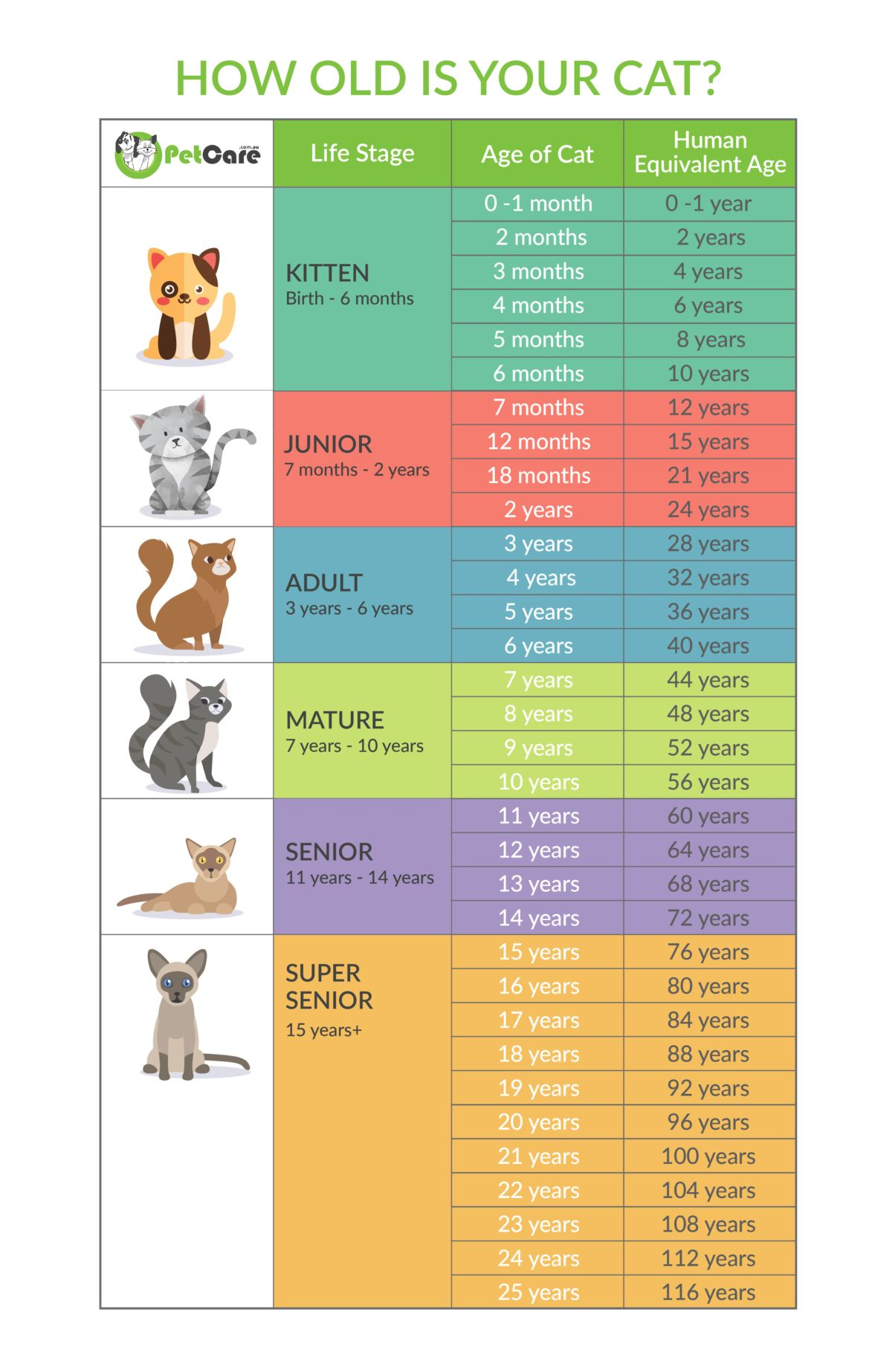 Cat Years Chart to human years infographic in 2020 Cat