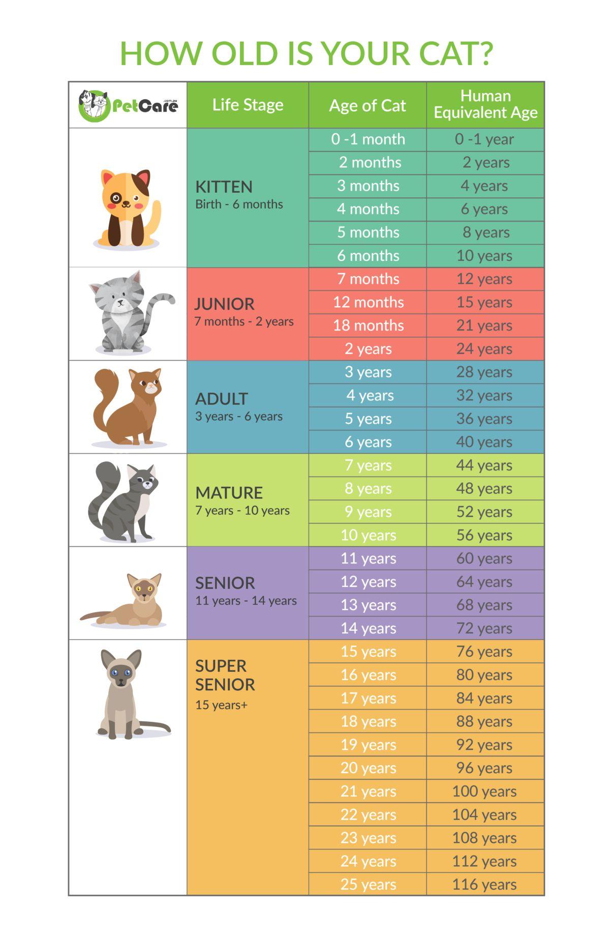 Dog Cat Years Calculator